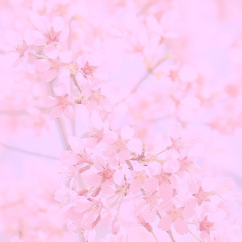 Light Pink Aesthetic Quotes - move on quotes for him